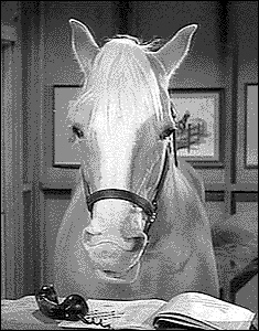 Mister-Ed-Talking-Horse
